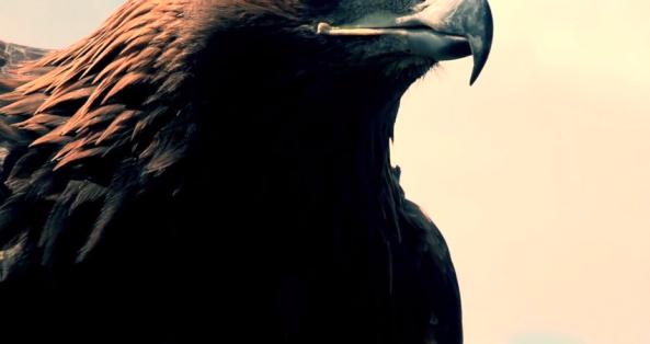 ambassador bird